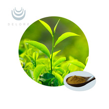 Free sample High Quality green tea extract ISO 9001 certificated with polyphenol