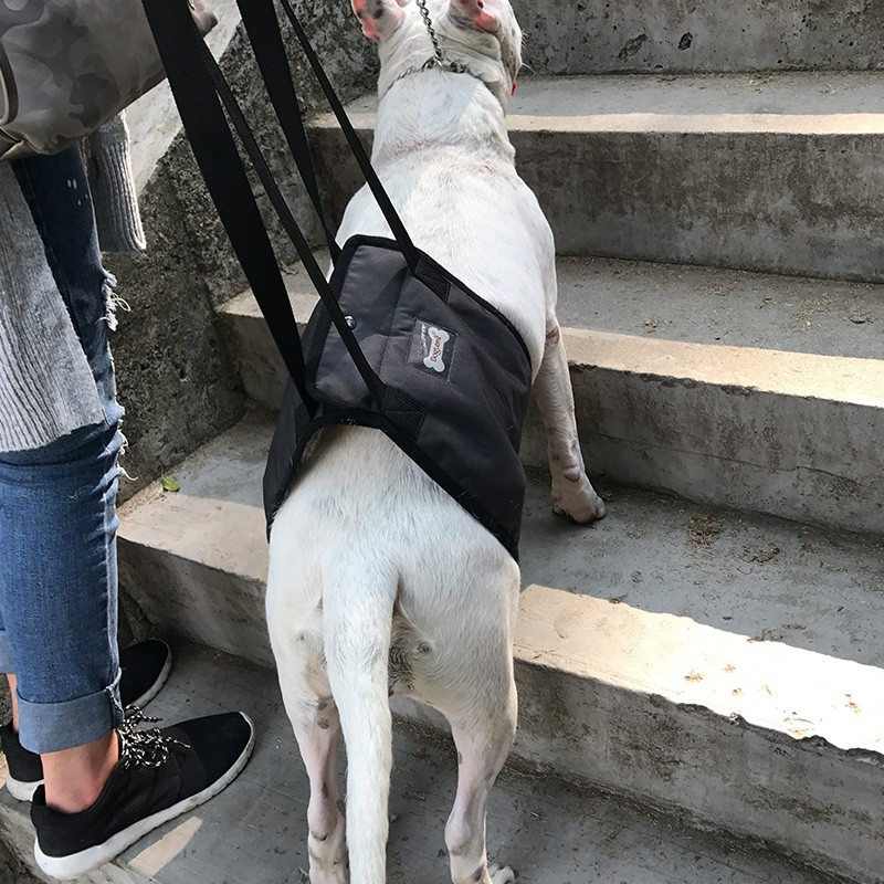 dog lift harness dog mobility harness with handle