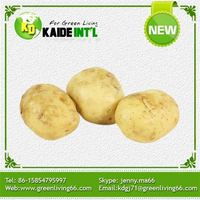 Alibaba 2016 China African Potato Factory Price