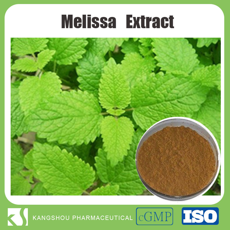 High quality natural Rosmarinic acid Melissa officinalis extract melissa extract