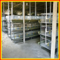 3 tier H Type broiler chicken cage
