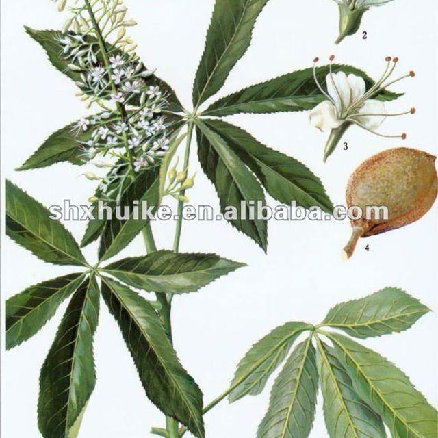 20% Aescin Horse chestnut Extract