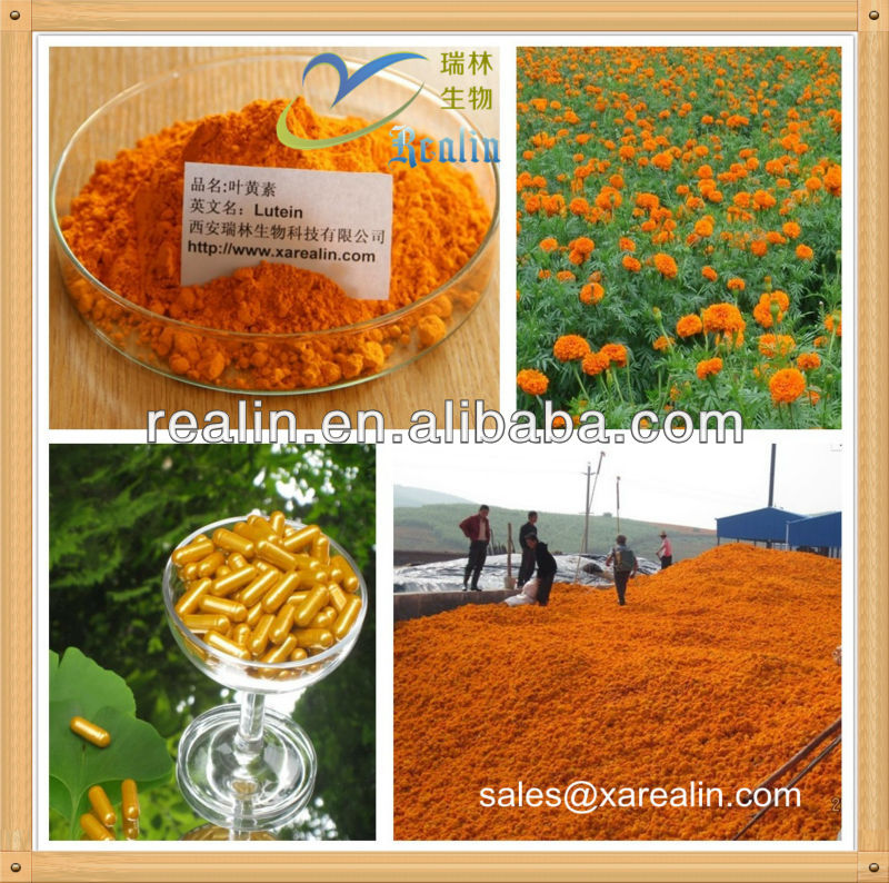 High quality lutein herbal extract / natural marigold extract lutein supplier