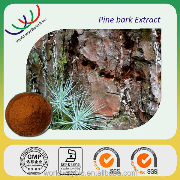 Chinese herb raw material natural pine bark extract powder with proanthocyanidins 95%