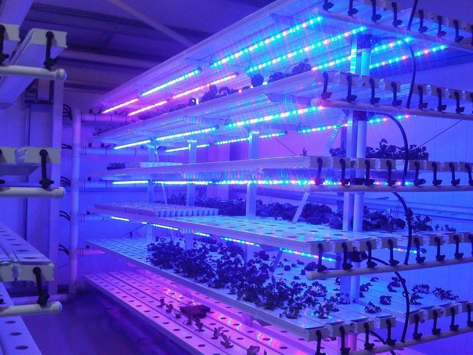Aerogarden / aeroponics system /hydroponic /greenhouse plant grow with led lights