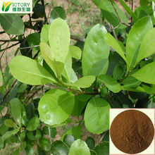 manufacturer supply yerba mate gourd tea plant 10:1 extract