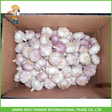 Shandong 10Kg/ Ctn Natural Fresh Normal White Garlic For Russia