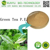 Top Quality Plant Extract Matcha Green Tea Powder