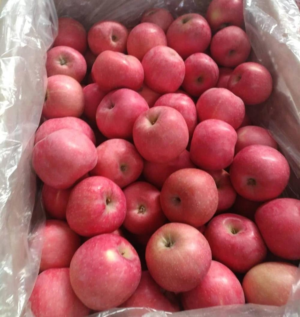 fuji apple with blush redness/yantai oring fuji