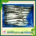 Frozen Mackerel Fish Spanish Mackerel