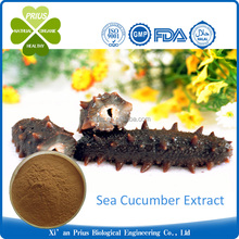 Best Quality pure Sea Cucumber Extract