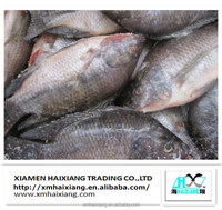 Frozen tilapia feed supplier from China