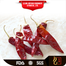 Bottom price hot dried Jinta Puya Chili