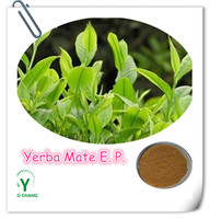 High Quality Yerba Mate Extract Powder 4:1