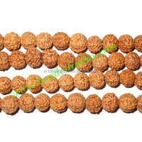 Rudraksha Beads 6 Mukhi (six face), size: 6mm