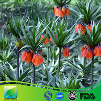 Chinese Herbal Medicine for cough relieve fritillariae hupehensis