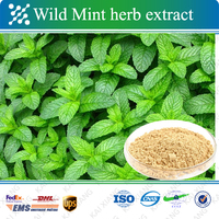 Hot Selling/High Quality/ Wild Mint Herb Extract/herbal tea
