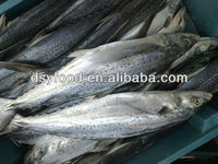 China frozen seafood supplier spanish mackerel fish wholesale with best price