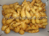 Fresh raw ginger hot sale in Pakistan market