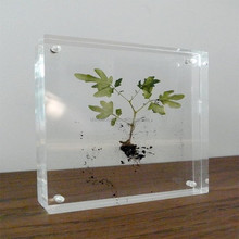 Chinese Eco-friendly acrylic magnetic plant specimen picture frame for making herbarium