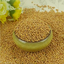 yellow broom corn millet grains millets