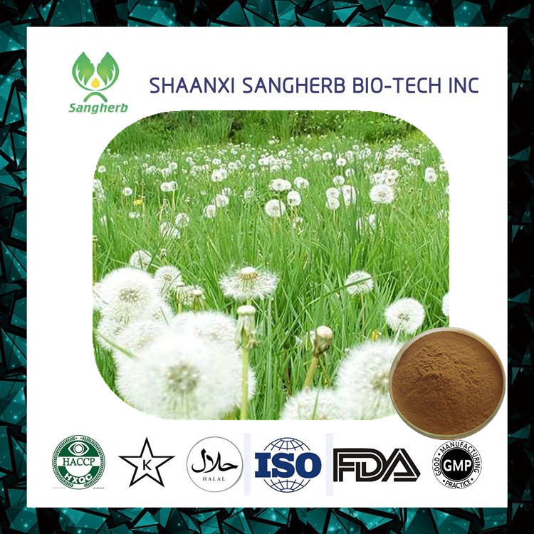 Good price of Roasted Dandelion Root Powder 60mesh for wholesale