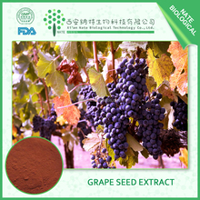 high quality products Antioxidants plant extract natural grape seed extract 60% OPC