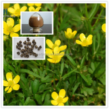 Ranunculus ternatus Thunb Alkaloids 1% Cat's Claw Extract