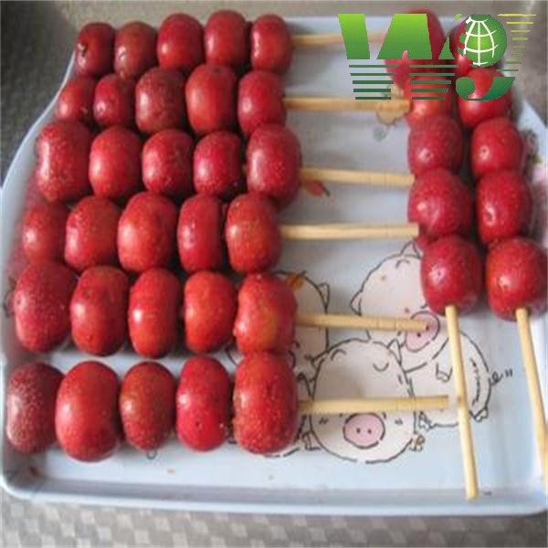 WY-174 Manufacturer popular Tonkin Square and round bamboo stake for making orchard flower plant