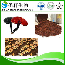 Health food Anti-cancer Glossy Ganoderma,lucid ganoderma extract