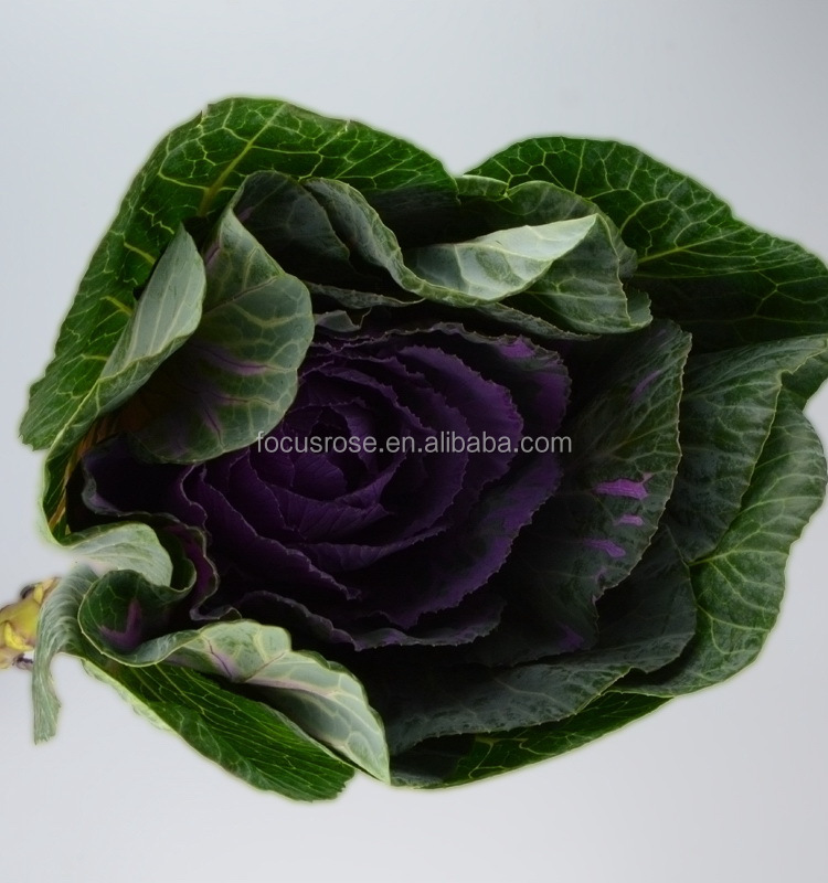 Wholesale natural plants direct supply from florist