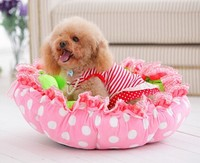 plush pet dog houses