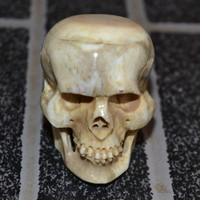 Head Skull Carved In Buffalo Bone Carving 60031770