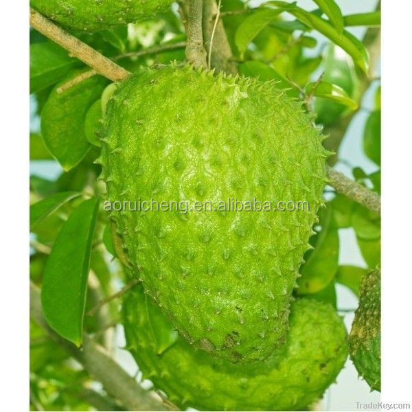 graviola soursop,soursop extract,soursop powder