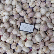 2016 china good quality fresh garlic