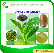 Hot sale Green Tea Extract/Camellia Sinensis O. Ktze. extract/30%~98% Polyphenols; 10%~98% EGCG; 5%~20% Theanine/Lv Cha