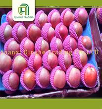 chinese red apple custard apple fruit fuji with high quality