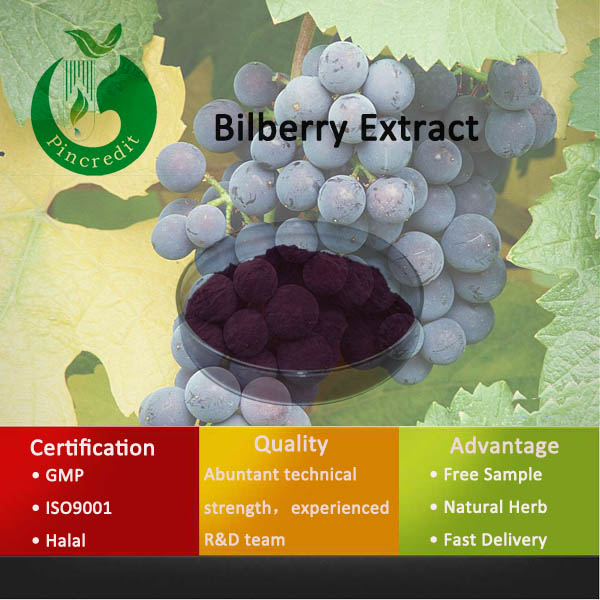 Best Price Supply Bilberry Juice Extract Powder Fresh Bilberry