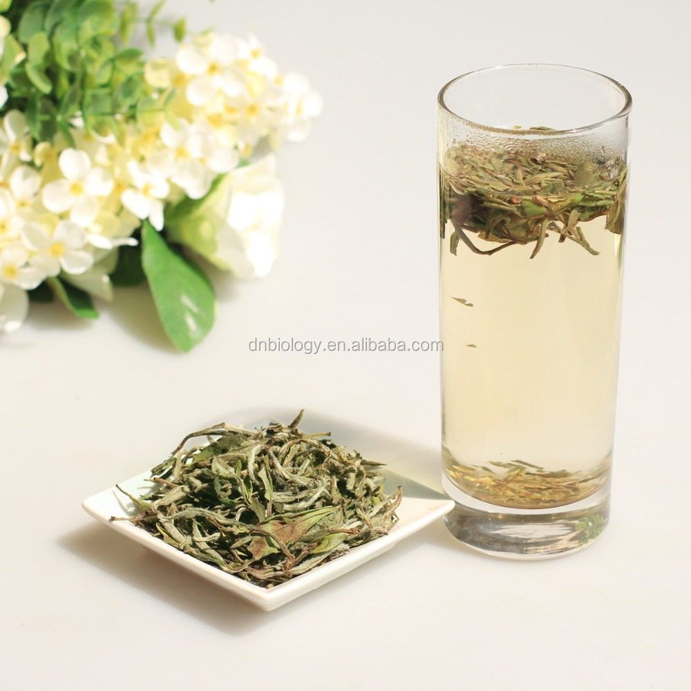 Organic White Tea Extract Bulk Price 20% 50% 98% Polyphenols 5% 65% Catechins 10% 40% EGCG