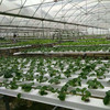 Greenhouse Low Price Agriculture Systems Hydroponic
