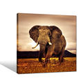2018 New Design Elephant Painting Art Picture Print On Canvas For Wall Decor Ready to Hang