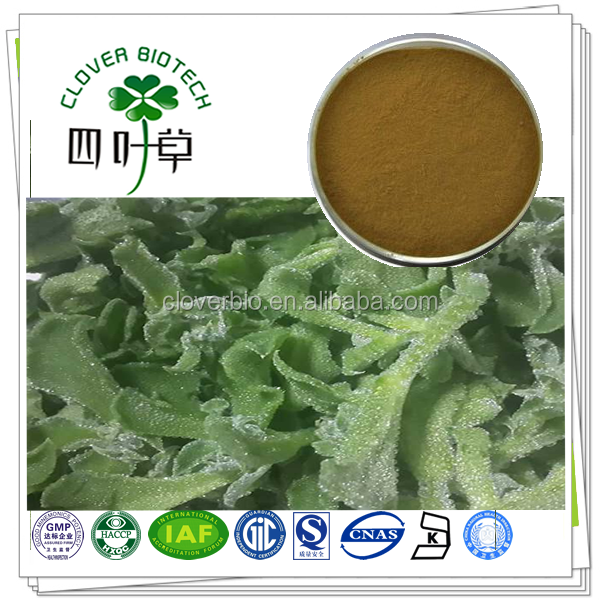 10:1 natural common ice plant extract
