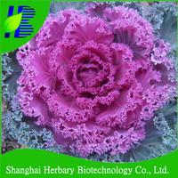 Garden scenery flower ornamental cabbage seed