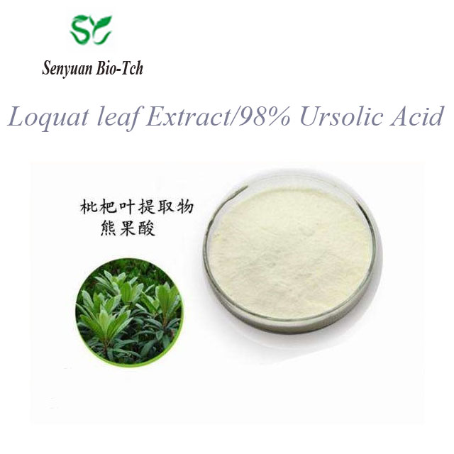 Competitive price Loquat leaf Extract/98% Ursolic Acid