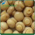 2016 best sell canned mushroom cultivation