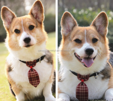 Happy corgis special Dog necktie pet accessories bow chain dog brand customization