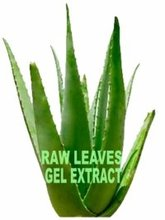 ALOE VERA LEAVES AND GEL EXTRACT