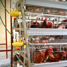 High Quality 4 Tiers A Type Chicken Layer Cage For Sale In Philippines