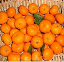 high quality fresh mandarin orange/oranges brands fruit