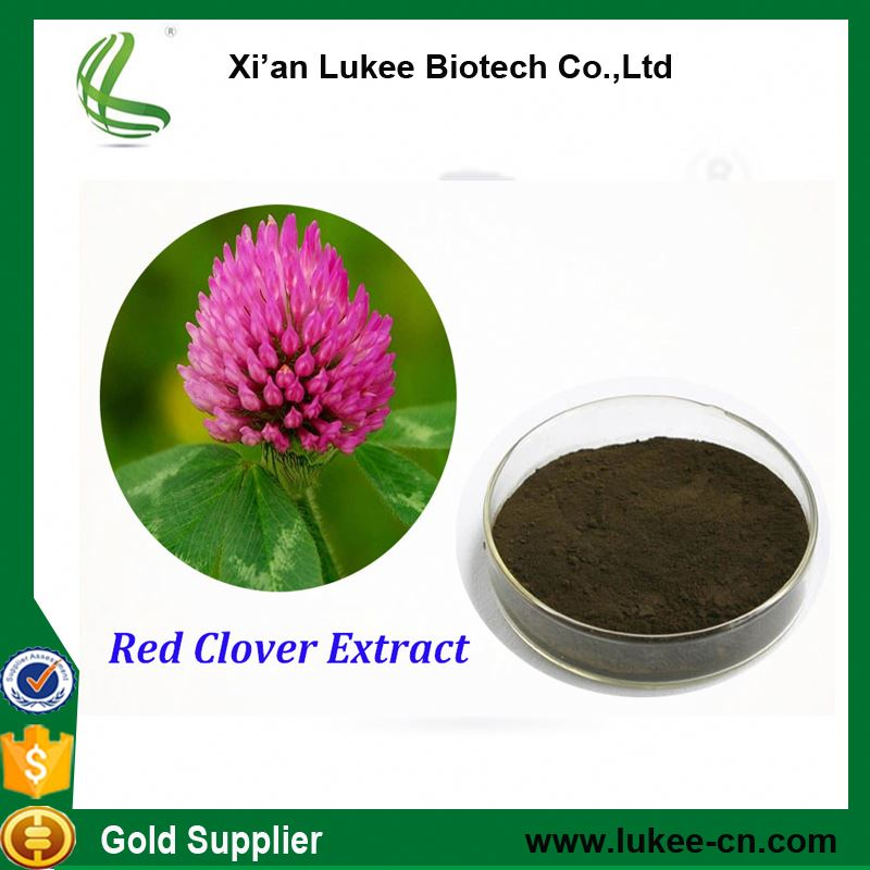 Estrogen enhancer Red Clover Extract /Trifolium pretense extract powder/Red Clove PE /isoflavone 2.5%, 8%, 20%,40%